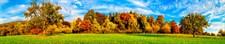 Фартук кухонный  АБС Солнечный лес 1,5х600х3000мм (1,8м2)