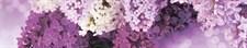 Фартук кухонный  АБС Сирень 1,5х600х3000мм (1,8м2) №97