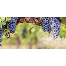 Фартук кухонный  АБС Гроздья винограда 1,5х600х3000мм (1,8м2) (№175)