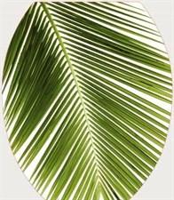 Сиденье для унитаза  Универсал Декор  Пальма